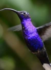 free hummingbirds screensaver windows 8 downloads